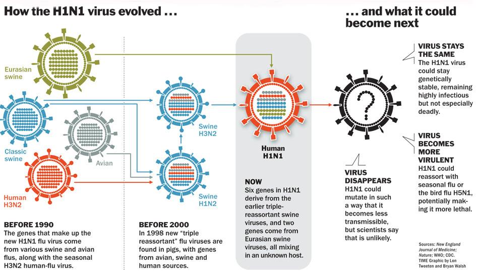 avian flu influenza a virus